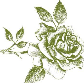 collyers-rose