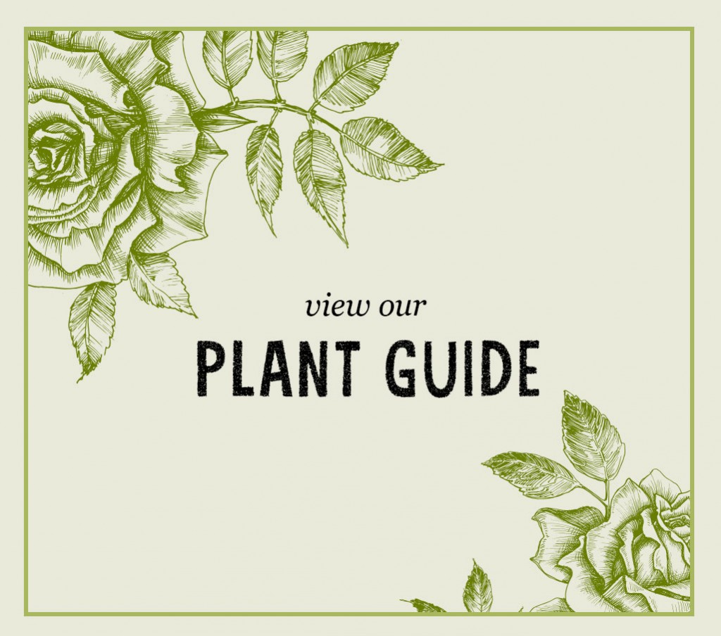 collyers-Plant-Guide