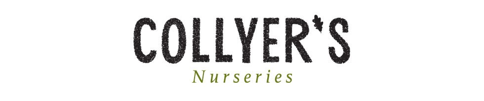 Collyers Nurseries